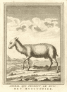 'Animal qui produit le Musc'. Musk deer. South Asia. SCHLEY 1755 old print